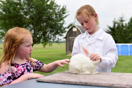 Samantha Link, 4, pets Whiskers the rabbit as her sister, Sydney, 9, sets him up.