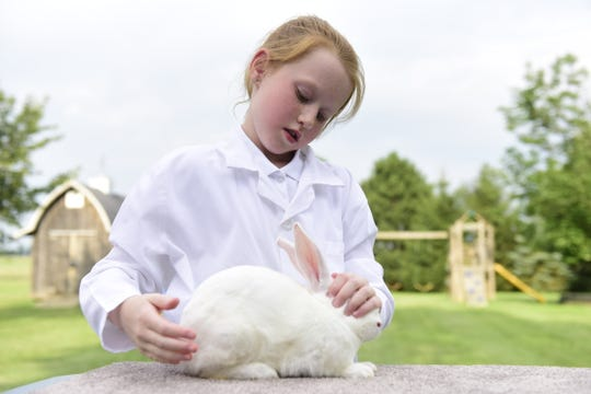 Sydney Link, 9, sets up her rabbit, Whiskers, who she will show Tuesday at the Crawford County Fair.