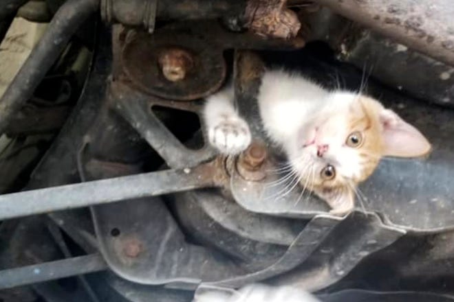 A kitten is trapped in the undercarriage of car at an auto repair shop in Frankfort, Ky.