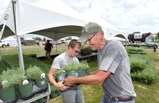 Keith Wiley, right, of St. Clair Shores, an outdoor floral retailer specializing in perennial plants, especially lavender, gets help from David Weaver, 16, of North Branch, as they unload one-gallon lavender plants at the Michigan Floral Marketplace tent. Wiley is the brother of Jennifer Vasich.