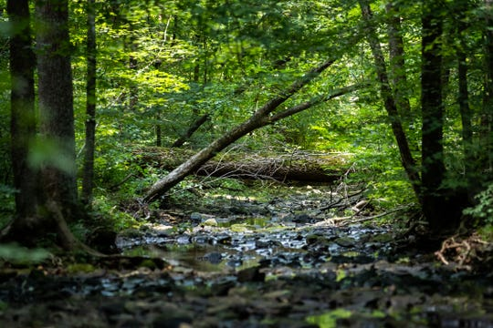 Cool water streams in the Cedar Grove Wildlife Corridor where LG&E's plans to build a new pipeline. July 9, 2019