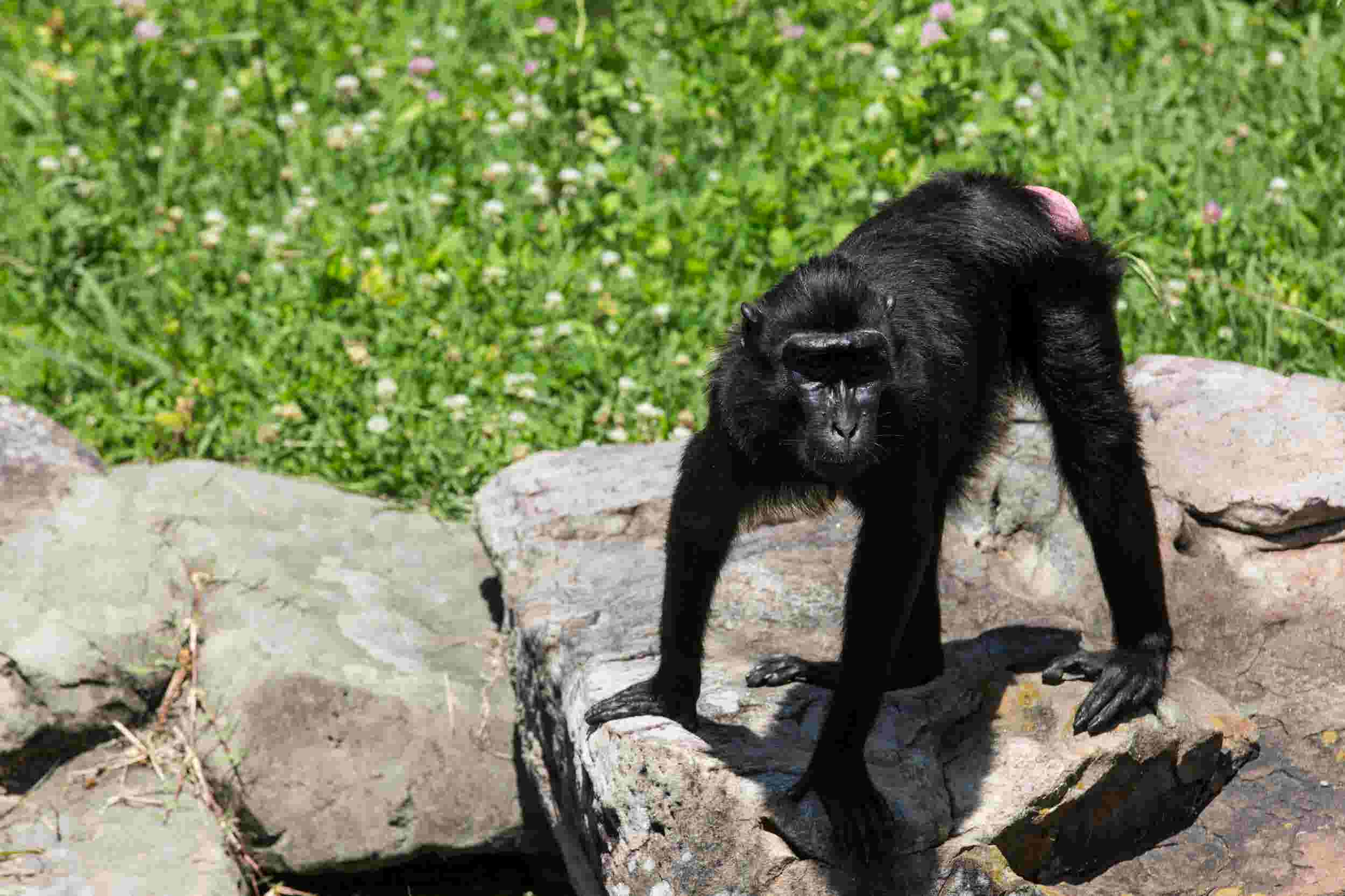 Never forget: Four years ago today, a lost monkey named Zimm was found again in Memphis