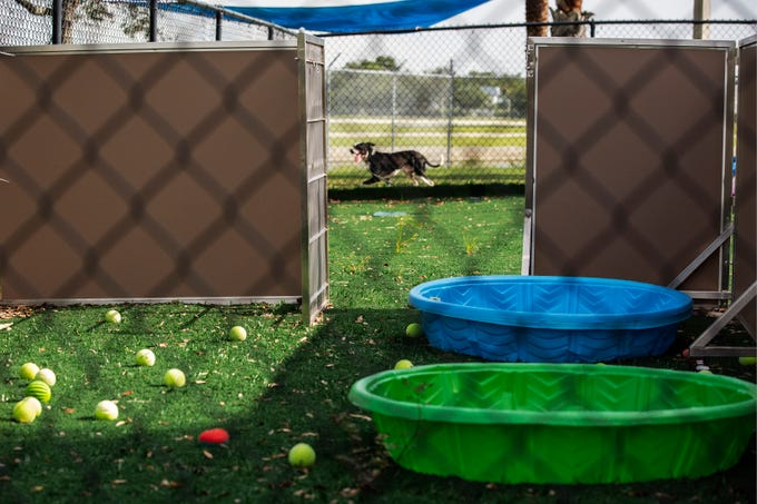 The Humane Society Naples offers behavior training to rescued dogs on Wednesday, July 10, 2019, in Naples. They will evaluate those dogs in the future to see if they are eligible for the Rescue Recess program.