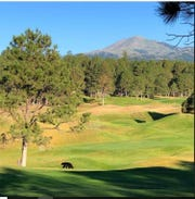 It is the time of year when wild animals are looking for both food and water. Bears and mountain lions have been seen in Lincoln County over the past few weeks. This bear decided to hit the course at The Links.