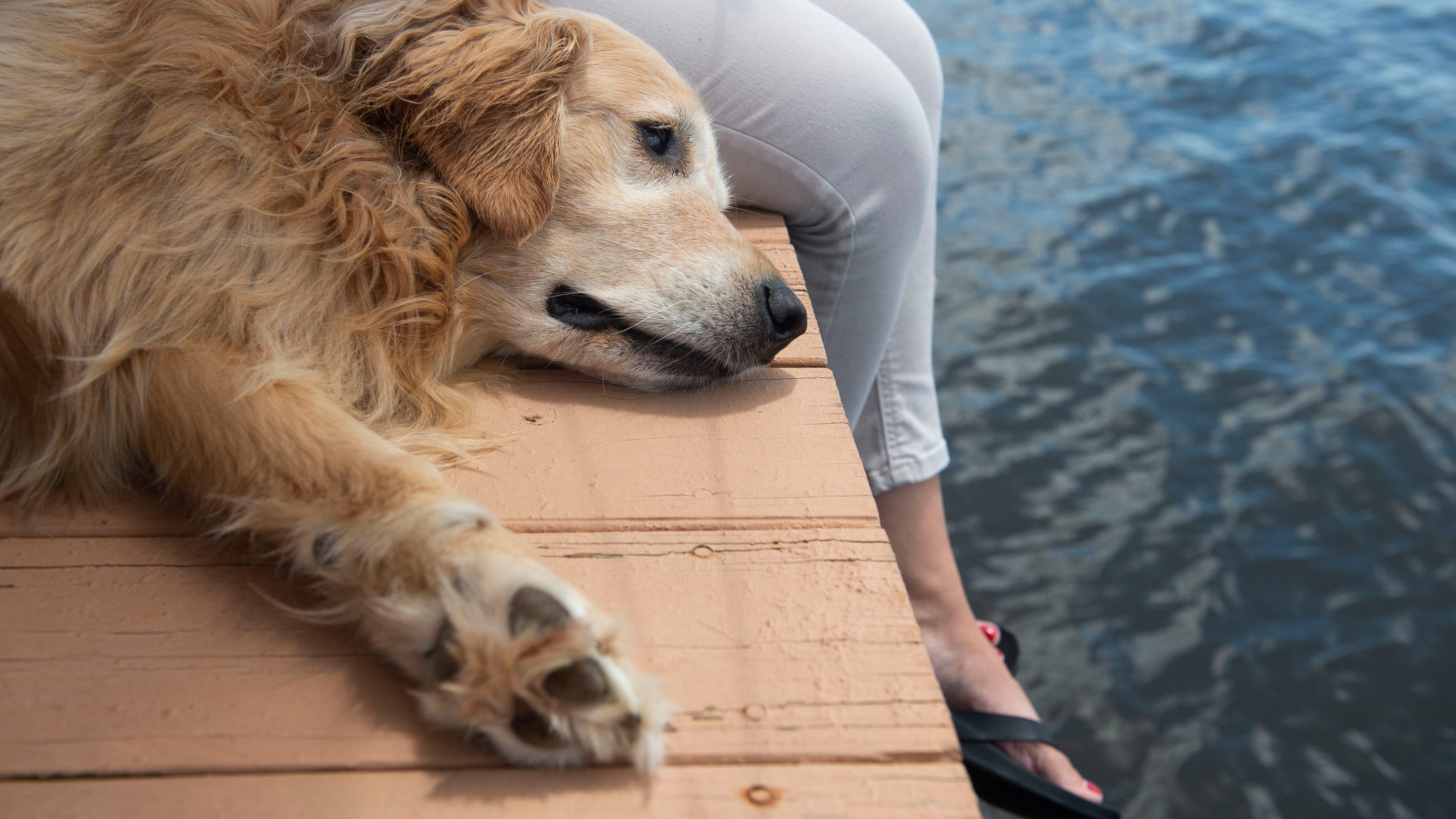 Water hazards for dogs: 7 things that could harm your pet