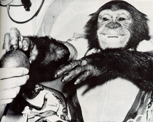 Meet Ham, chimpanzee of the year, shown in a Feb. 1, 1961, photo. The big space ape, who seems to be trying to live up to his title with that matinee-idol smile, is shown reaching for the big red apple that was part of his reward for a job well-done. On Jan. 31, 1961, Ham left Earth abruptly in a mighty Redstone rocket, and zoomed 155 miles out into space before descending into the Atlantic 420 miles southeast of his starting point at Cape Canaveral, Florida. Plucked from the sea by a helicopter from the USS Donner, he shook hands with the veterinarian who greeted him when his 1-ton space capsule was unlocked, then gratefully accepted a banana and an apple.