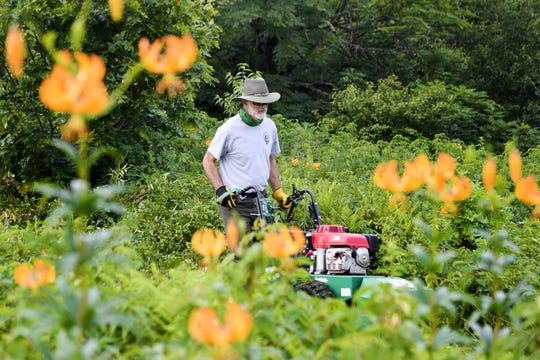 Chris Ulrey, a plant ecologist with the Blue Ridge Parkway,  uses a brush mower to clear woody plants from Craggy Flats off of the Blue Ridge Parkway on July 11, 2019. The mowing is part of a grassy bald restoration project done about once every three years and is meant to simulate the grazing animals that historically were brought to the area.