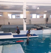 Trainers feed and work with Winter and other dolphins at the Clearwater Marine Aquarium. The Taylor family of Warsaw recently went to the facility while in Florida through the Casey Cares Foundation.