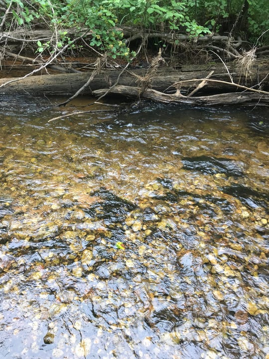 Rocky, cool, Northern Michigan streams such as this one in Emmet County are the Hungerford's crawling water beetle's habitat.
