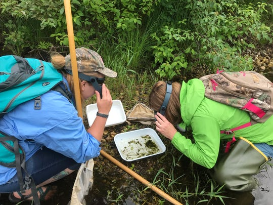 Biologists Kristina Scarborough and Natalie Dingledine search for Hungerford's crawling water beetle on the East Branch of the Maple River in Emmet County in this July 28, 2018 photo.