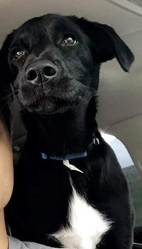 A dog named Lil Bits was in a car that was stolen in Marketplace Friday morning.