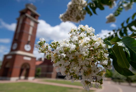 Crepe myrtles bloom on the Troy Montgomery campus in Montgomery, Ala., on Friday July 12, 2019. The campus has received the Tree Campus USA designation.