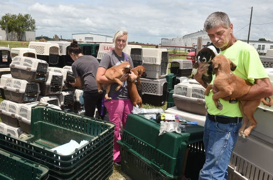 VolunteersBrooke Wagley and Peter Eynard prepare to place four puppies into kennels for evacuation by the United States Humane Society.