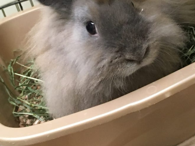 Fancy gets along with children, cats, dogs and even other rabbits.