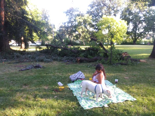 Edward McNeill took this photo of his wife, Adriana McNeill, and their pit bull, Wedda, on the grass at Caldwell Park, not too far from the spot where he said an oak branch came crashing down on Wednesday, July 10, 2019.