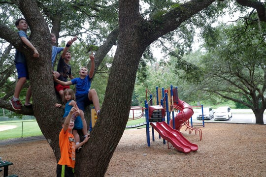 While climbing a tree at Optimist Park Andrew Sprague, 11, left, and his friends Jackson Sprague, 13, Harrison Sanders, 9, Jackson Hamilton, 11, Elaine Hamilton, 5, and Toby Sprague, spot a bird's nest.