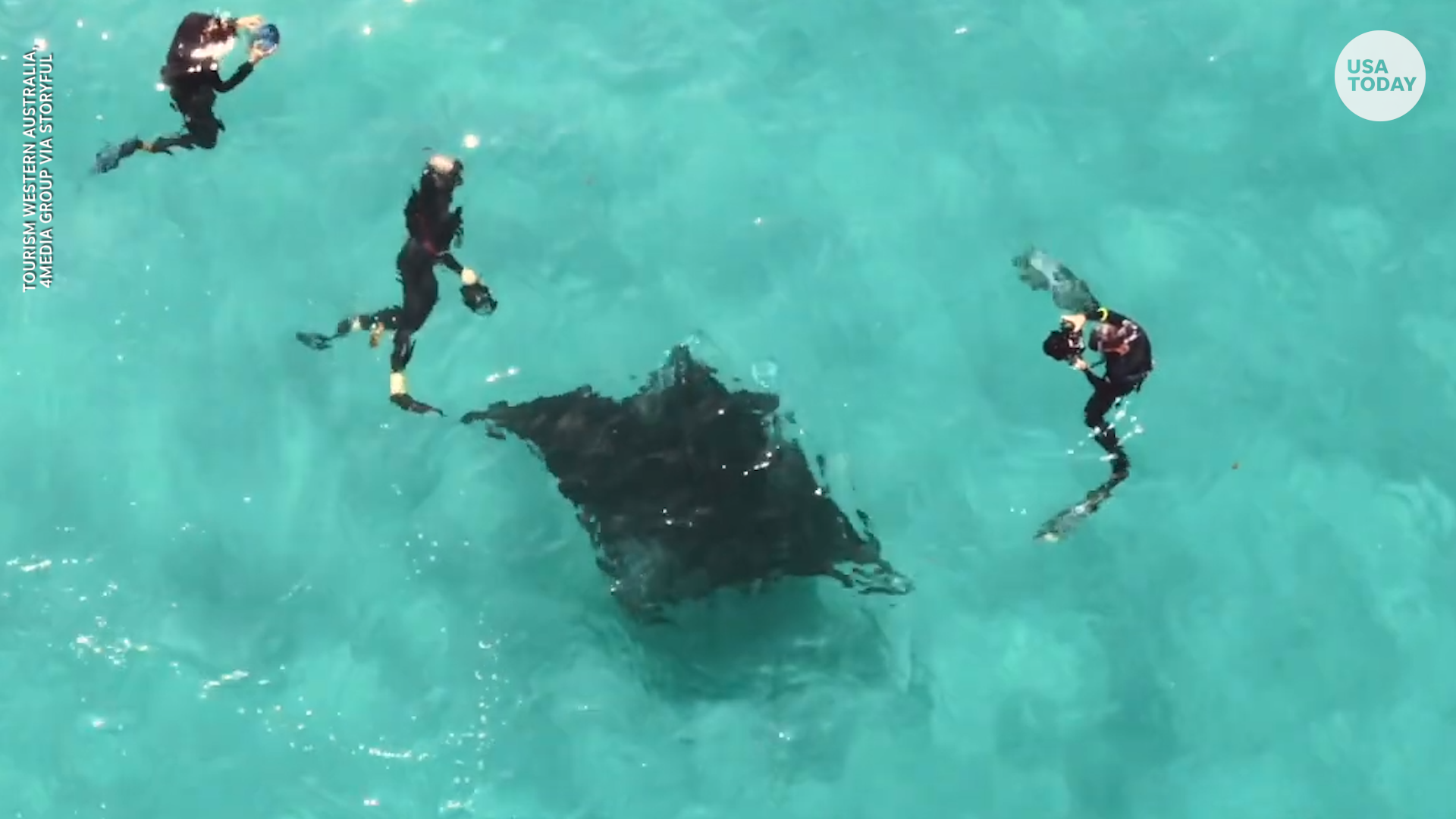 Incredible video shows manta ray seeking help from divers