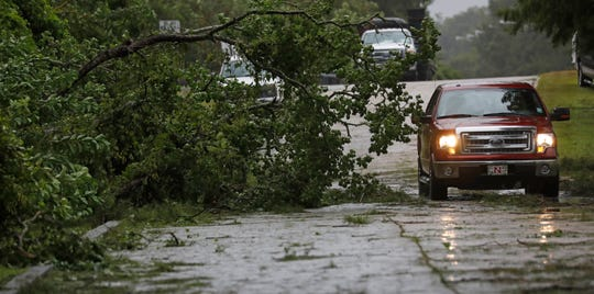 A truck maneuvers around this downed tree after strong wind gusts dropped it in west Morgan City, La., Saturday morning July 13, 2019. Most residents stayed off roads as they prepared for the rains from Hurricane Barry.