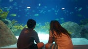 Danny and Mary Maguire watch as fish swim past them at one of many family visits to OdySea.