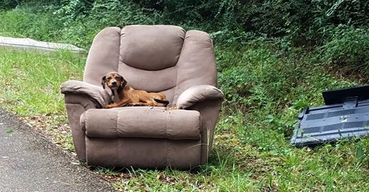 A viral photo of a sick dog in a recliner prompted Monroe-based La-Z-Boy to donate money and pet beds to the Mississippi animal group that took in the dog.