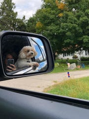 Squirt, the Sedar family dog, checks out the neighborhoods passing by.