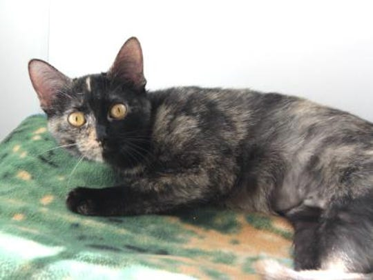 Penny Lane came to the Licking County Humane Society over 3 months ago after she was found by a good Samaritan who could not locate her owner.