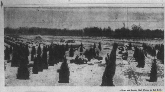 Sarcoxie Nursery's evergreen-tree fields are shown in this April 22, 1962 News-Leader photo. The nursery had been operating 88 years by that time, the News-Leader reported.