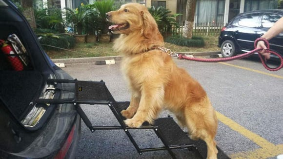 These foldable dog stairs make it easier for your pup to go where you go.