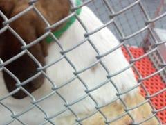 Dogs deserve better than brutal VA research that wastes money better spent on veterans
