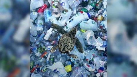 It's not yet known whether microplastics are dangerous for us on their own, but scientists do know that they contain toxic chemicals.
