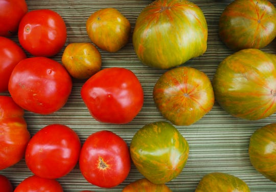 Tomatoes from Ten Mile Farm