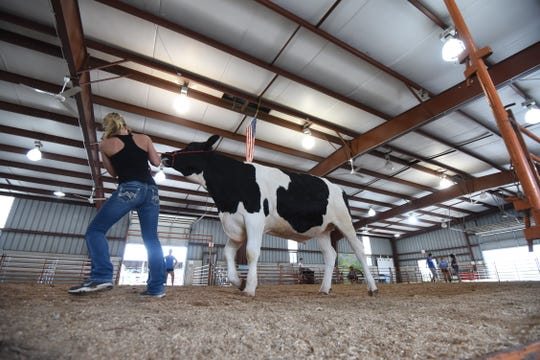 Free rides, livestock shows a full lineup of grandstand entertainment will await visitors to next month's Crawford County Fair.