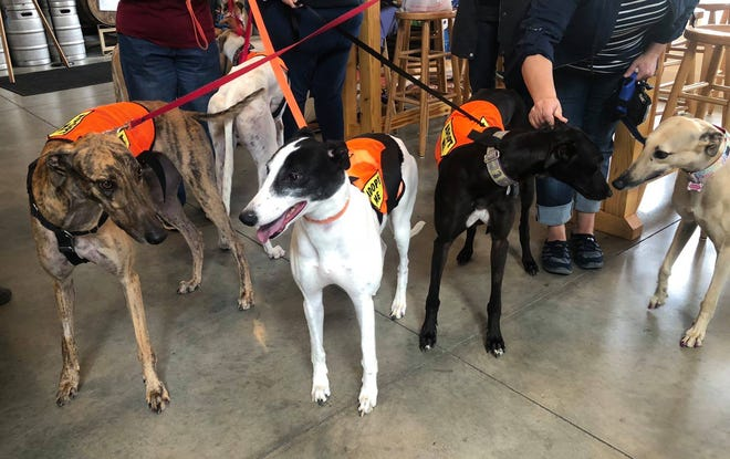 New Jersey Greyhound Adoption Program (NJGAP) will host a Meet & Greet during Salsa Night from 6 to 9 p.m. on Saturday, July 20, at Lone Eagle Brewing, 44 Stangl Road in Flemington.
