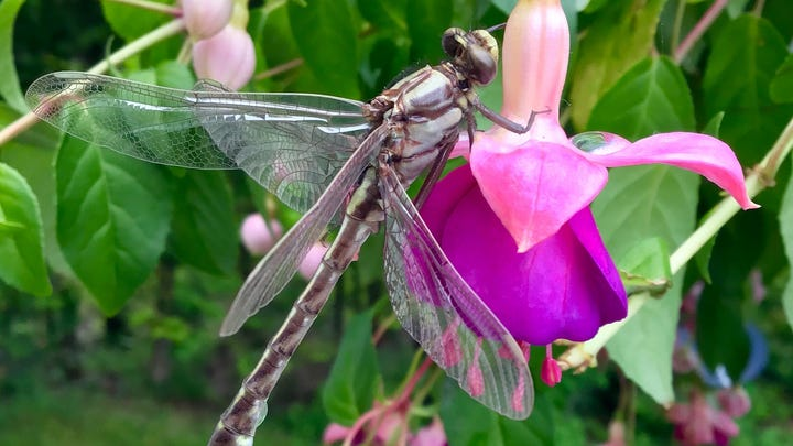 Dragonfly photo wings its way into Celebrate Michigan finals