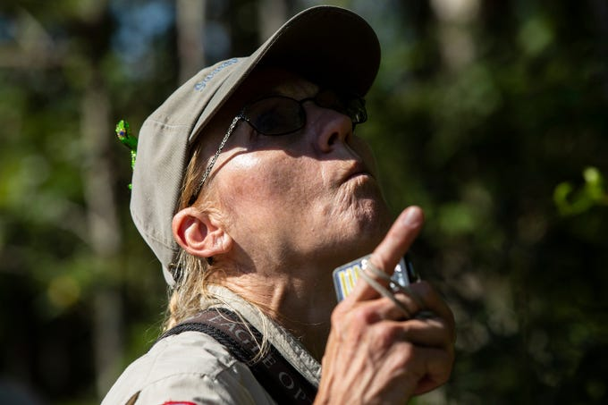 Day Captain Amy Swanson, looks up in the woods on Tuesday, July 16, 2019, at the AudubonÕs Corkscrew Swamp Sanctuary. Corkscrew's annual butterfly count is part of the North American Butterfly Association butterfly surveys that are conducted across the United States, Canada and Mexico.