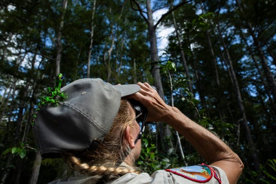 Day Captain Amy Swanson looks through a telescope during a butterfly count on Tuesday, July 16, 2019, at Audubon's Corkscrew Swamp Sanctuary. Corkscrew's annual butterfly count is part of the North American Butterfly Association butterfly surveys that are conducted across the United States, Canada and Mexico.