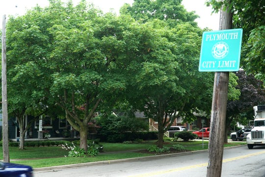 Plush trees like these in Plymouth will continue to thrive following the passage of a tougher tree ordinance.