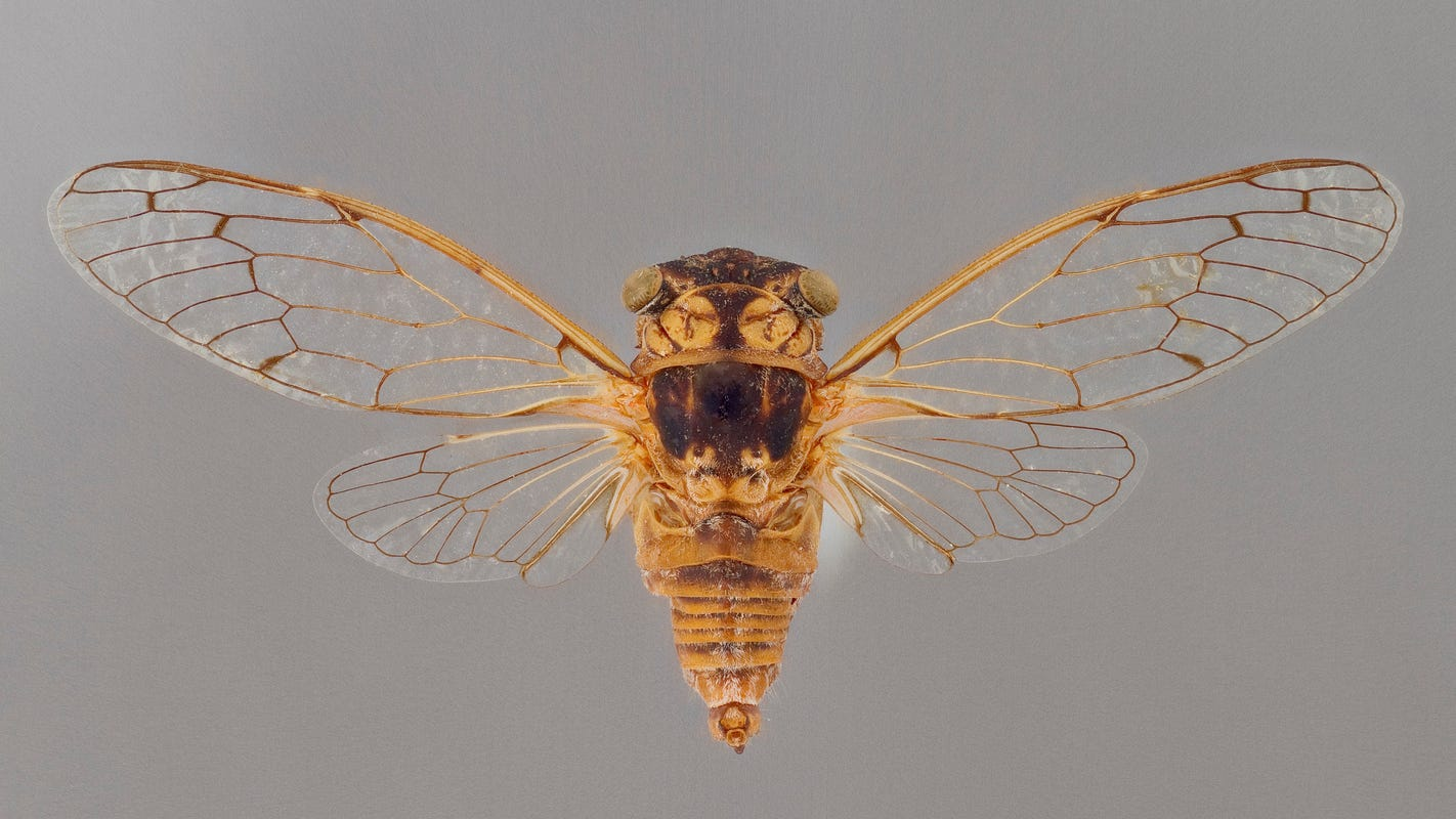 Cicadas are buzzing. Does that mean Arizona's monsoon storms are coming?