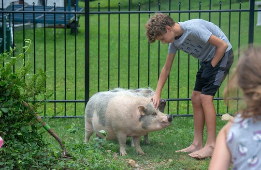 "Ethan Schroyer, 12, says his potbellied pigs, Kevin and LuLu ""make his life happier."" His family is fighting for the right to keep them as pets in their Manchester Township home."