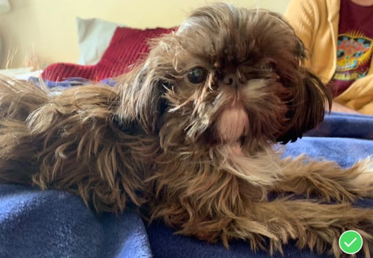 The Ontario County Sheriff's Office and the Ontario County Humane Society are asking for help locating Truffles, a 1-year-old female Shih Tzu, taken from a carparked at Canandaigua's Roseland Plaza, 3225 Routes 5 and 20, near TJ Maxx, around 2:20 p.m. Sunday.