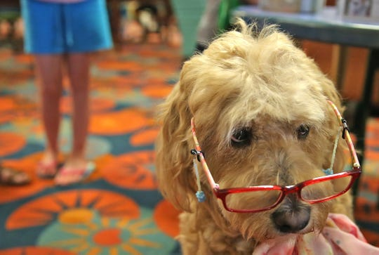 Hattie the canine reading tutor gets ready to work during the Tail Waggin Tutors program at Stephens Central Library on Tuesday, July 16, 2019.