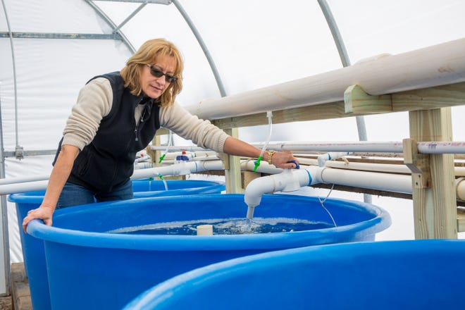 Florida State University researcher Sandra Brooke, who will serve as the scientific director for FSU's Apalachicola Bay Systems Initiative funded by an $8-million grant from Triumph Gulf Coast.