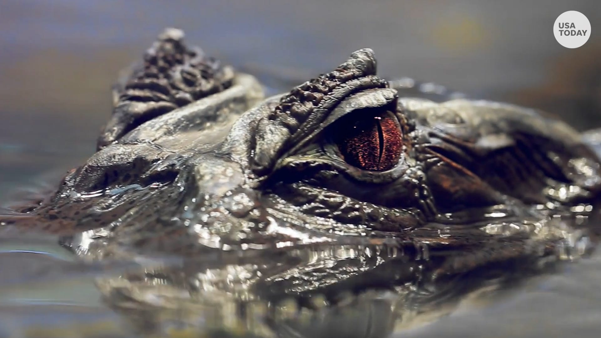 Flushing drugs down toilets could create 'meth-gators,' police warn