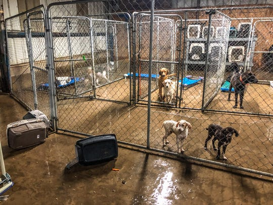 The Humane Society of Clark County in Arkadelphia issued an SOS after flooding inundated a shelter, killing a puppy.