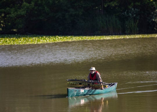 """Alligator Bob,"" an animal expert with the Chicago Herpetological Society, sets alligator traps in Humboldt Park Lagoon, Wednesday, July 10, 2019. Officials hope to trap an alligator at the lagoon and safely remove and relocate it to a zoo for veterinary evaluation."