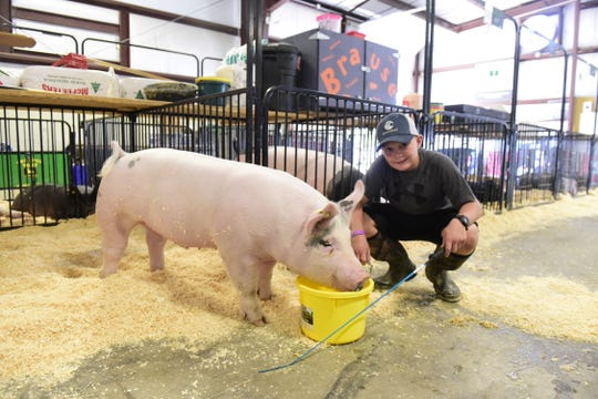Seth Pope, 12, waters his pig, Luke Duke, during a hot Wednesday afternoon at the 2019 Crawford County Fair.