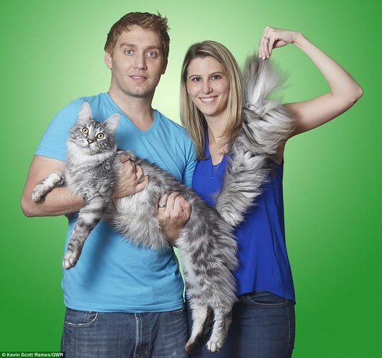 Will and Lauren Powers hold Cygnus, a silver Maine Coon cat, which had the longest tail of any living domestic feline at 17.58 inches. He died in a house fire, along with the Powerses two other cats.