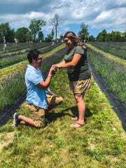 Josh Perez of Lansing proposes to longtime girlfriend Alexus Gonzales amid the rows of lavender at Indigo Lavender Farms on Saturday. They've been dating since middle school.