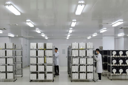Containers where Aedes albopictus mosquito larvae are being raised at the Guangzhou Wolbaki Biotech lab in Guangzhou, China.