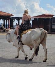 A girl riding an ox near Viñales